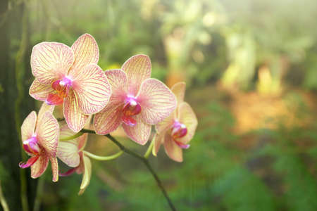 grown: Colorful fully grown orchids in greenhouse