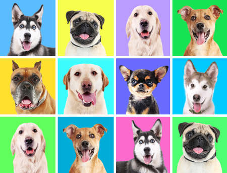 cute dogs: Portraits of cute dogs on colorful backgrounds