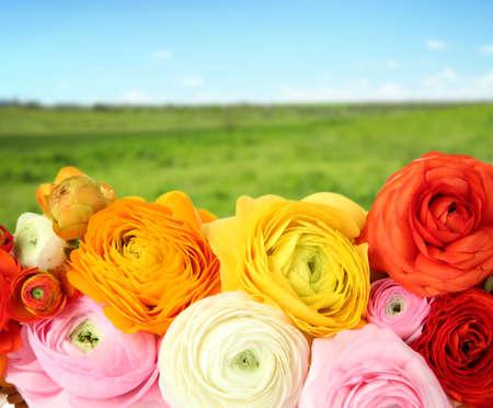 buttercups: Beautiful boquet  on nature  background Stock Photo