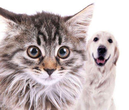 perro furioso: Gato enfadado y perro feliz, aislado en blanco Foto de archivo