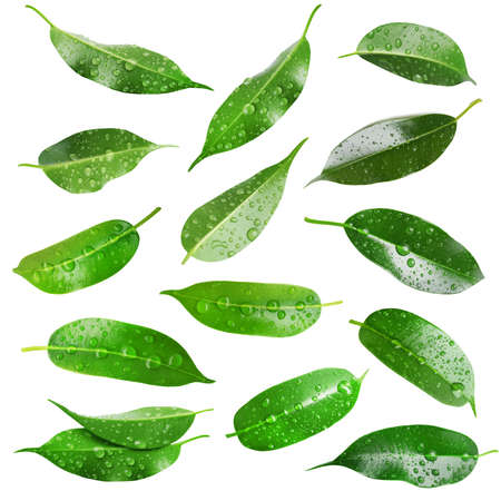 water on leaf: Collage of beautiful green leaves isolated on white