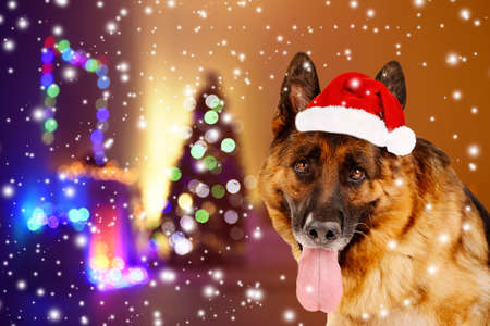 scamper: Funny dog with Santa hat near Christmas tree