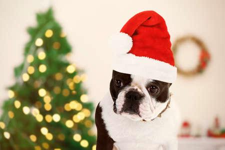 Funny dog with Santa hat near Christmas tree
