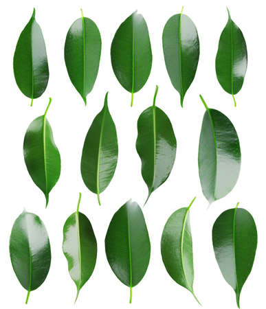 Collage of beautiful green leaves isolated on white Imagens