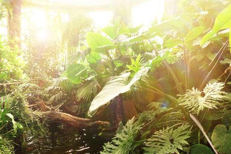 botanic: Plants in greenhouse at botanic garden Stock Photo