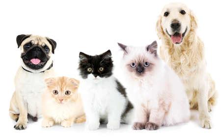 Gatos y perros lindos, aislados en blanco