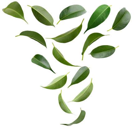 Collage van mooie groene bladeren geïsoleerd op wit Stockfoto