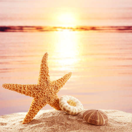 Starfish and shells on sandy beach at sunset time