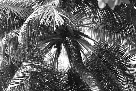 stylization: Palm tree, retro stylization, close-up
