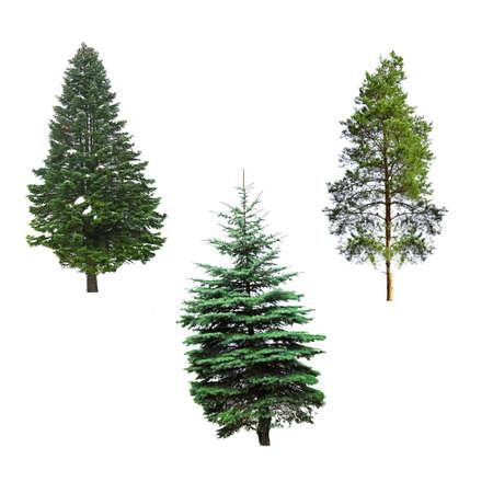 Fir-bomen, geïsoleerd op wit Stockfoto
