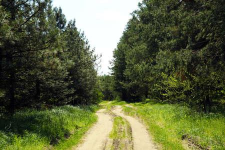 arboleda: pista de laminado en Forest Grove