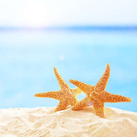 Starfishes on sandy beach