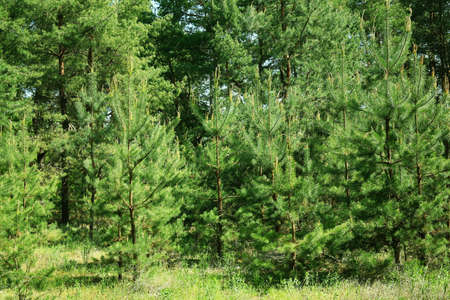 grove: Green trees in forest grove Stock Photo