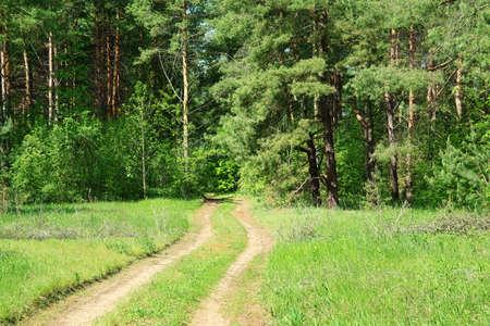 arboleda: pista de laminado a trav�s de Forest Grove