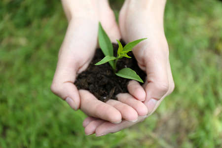 earth handful: Green seedling growing from soil in hands outdoors