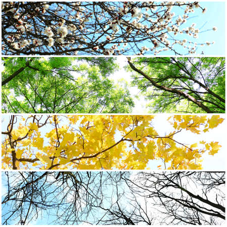 Four seasons collage: several photos of beautiful trees at different time of the year - winter spring, summer, autumn Foto de archivo