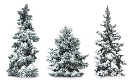 Tannen mit Schnee, isoliert auf weißem