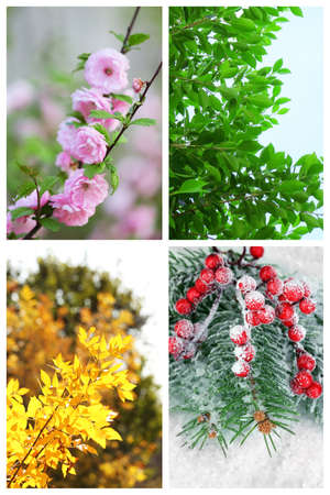 Four seasons collage: several photos of beautiful trees at different time of the year - winter spring, summer, autumn Standard-Bild