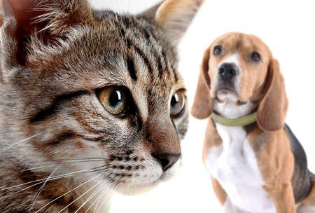 Kat en hond, geïsoleerd op wit Stockfoto
