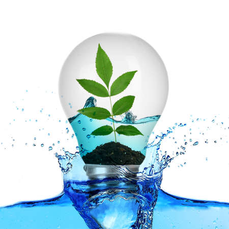 growing inside: Tree leaves growing inside light bulb with water and in water splash isolated on white Stock Photo