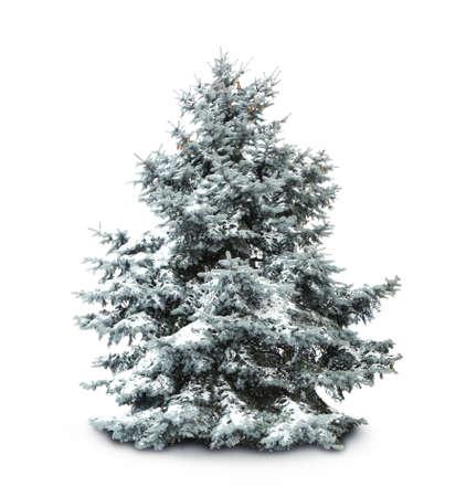 Tannenbaum mit Schnee, isoliert auf weißem