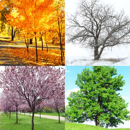 winter photos: Four seasons collage: several photos of beautiful trees at different time of the year - winter spring, summer, autumn Stock Photo