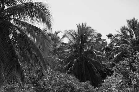 ideally: Palm trees, retro stylization, close-up