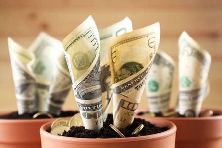 Growing money in flowerpots close up