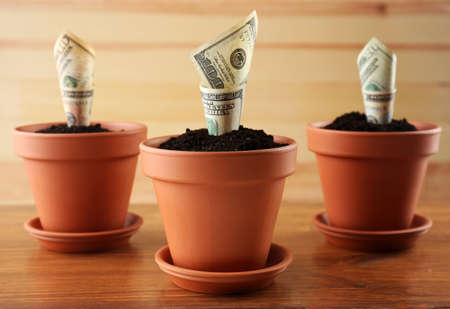 flowerpots: Growing money in flowerpots on wooden background Stock Photo