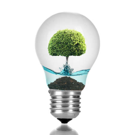 growing inside: Tree growing inside light bulb with water isolated on white
