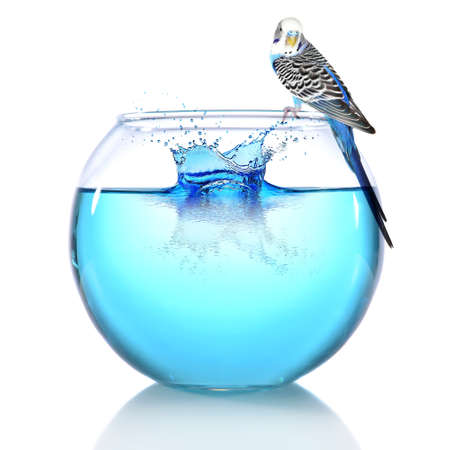 it is isolated: Fish bowl with water and little blue parrot on it isolated on white Stock Photo