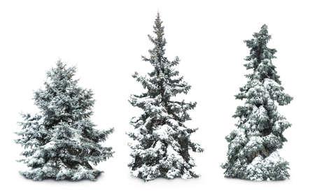 Sapins avec de la neige, isolé sur blanc