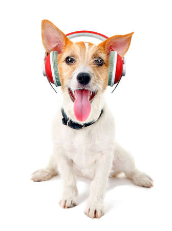 adult bones: Cute dog with headphones isolated on white