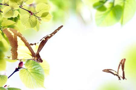 saison de printemps ou d'été fond nature abstraite avec des papillons