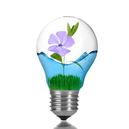 growing inside: Green eco energy concept. Flower growing inside light bulb with water, isolated on white Stock Photo