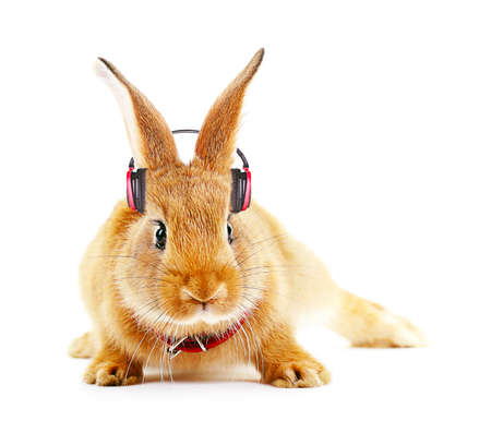 music therapy: Red rabbit with headphones isolated on white