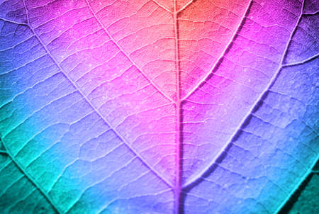 leaf close up: Multicolor fresh leaf, close up