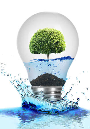 growing inside: Tree growing inside light bulb with water and in water splash isolated on white Stock Photo