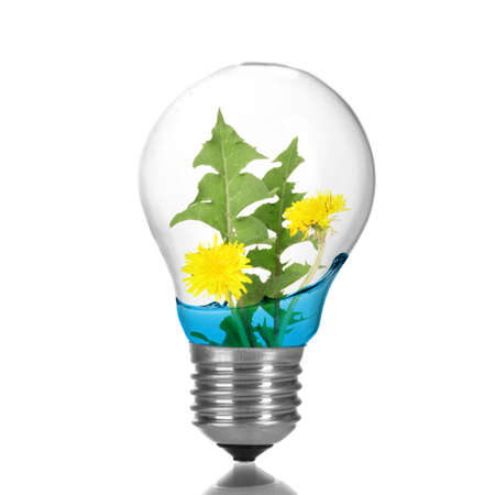 growing inside: Green eco energy concept. Tree growing inside light bulb with water, isolated on white Stock Photo