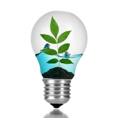 growing inside: Green eco energy concept. Tree leaves growing inside light bulb with water, isolated on white Stock Photo