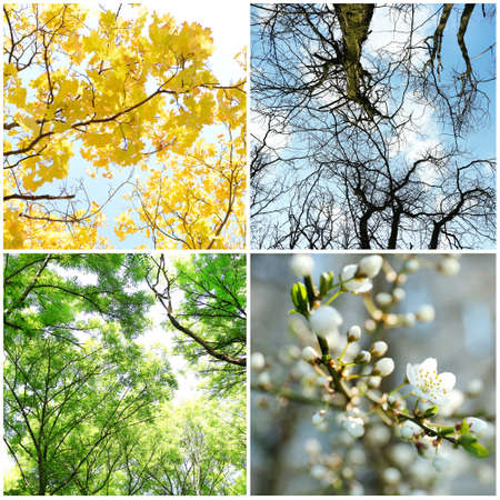 Four seasons collage: several photos of beautiful trees at different time of the year - winter spring, summer, autumn Stock Photo
