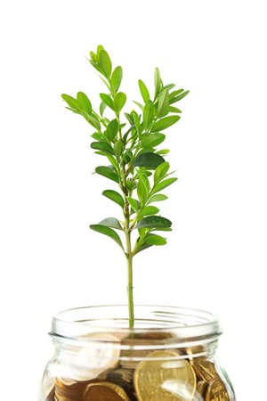 economic botany: Money with growing sprout in glass jar isolated on white