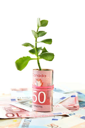 pile of money: Money with growing sprout isolated on white