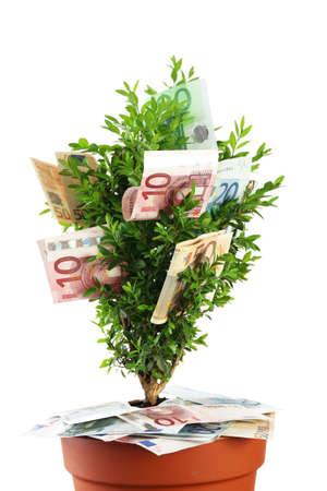 economic botany: Decorative tree in pot with money isolated on white
