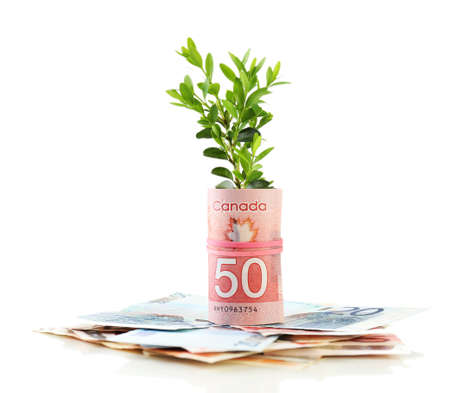 economic botany: Money with growing sprout isolated on white