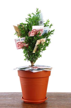 economic botany: Decorative tree in pot with money on table isolated on white Stock Photo