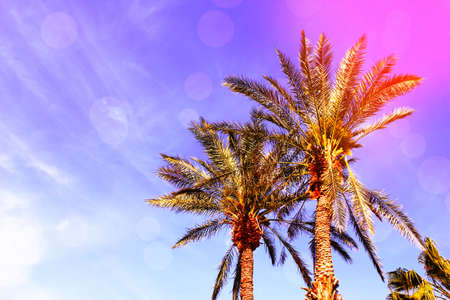 Beautiful background with palm leaves