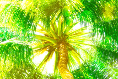 Top of palm leaves  as background