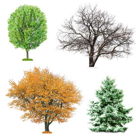 estaciones del año: Conjunto de cuatro árboles de temporada sin hojas, aislado en blanco