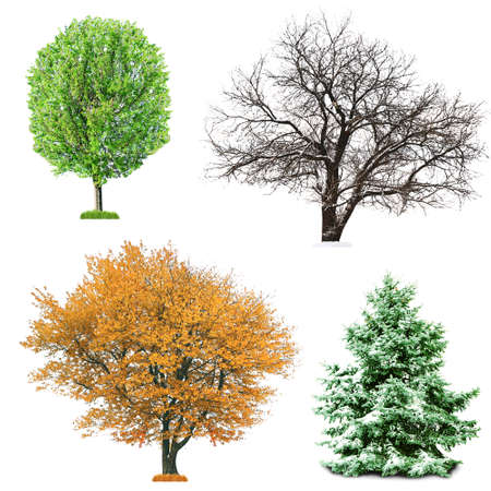 season: Set of four seasonal trees without leaves, isolated on white